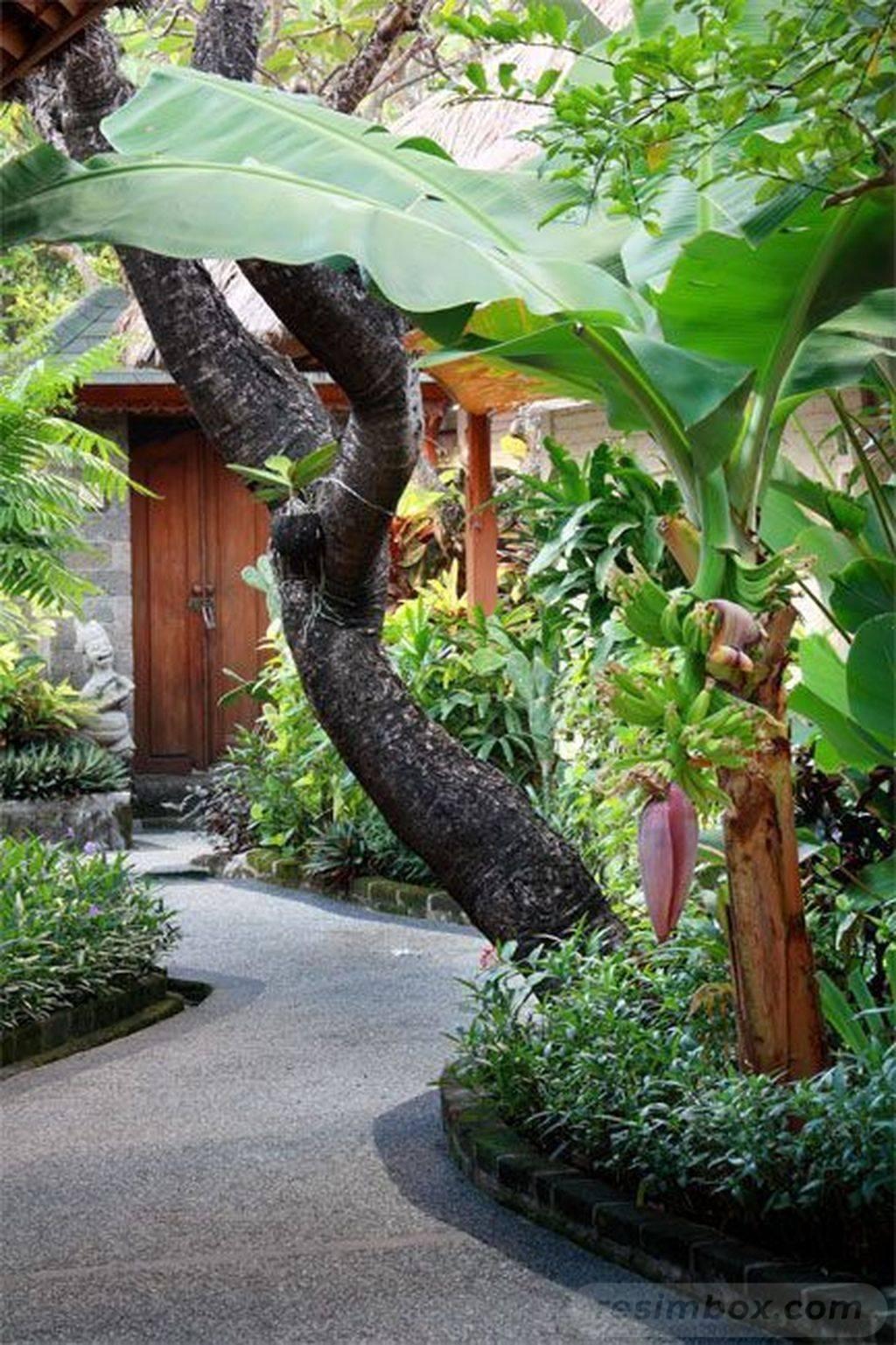 tropical garden ideas-647673990141188373