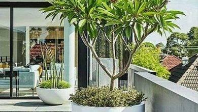 14 Tropical Flower Garden Ideas