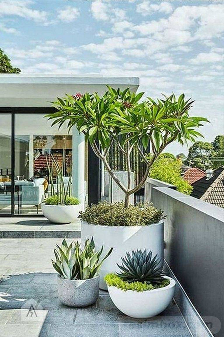 tropical garden ideas-751749362780032034