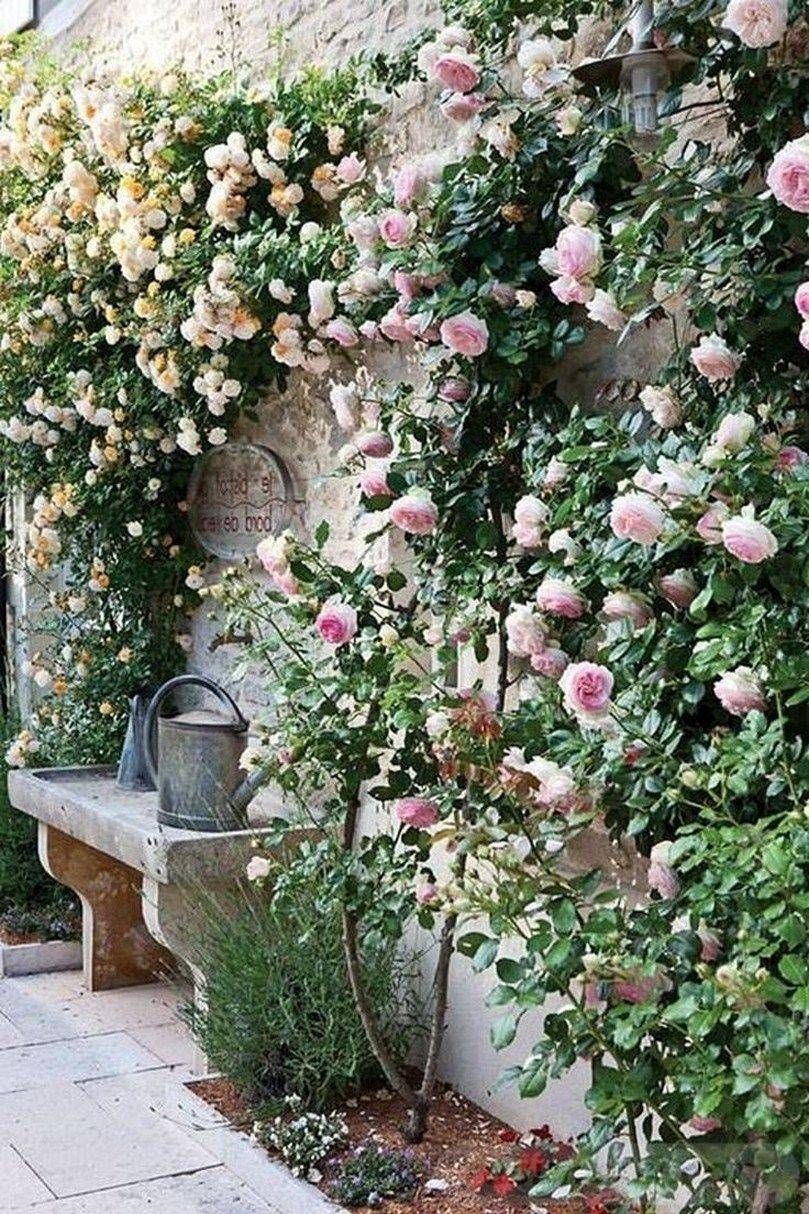 amazing garden ideas-723953708830942566