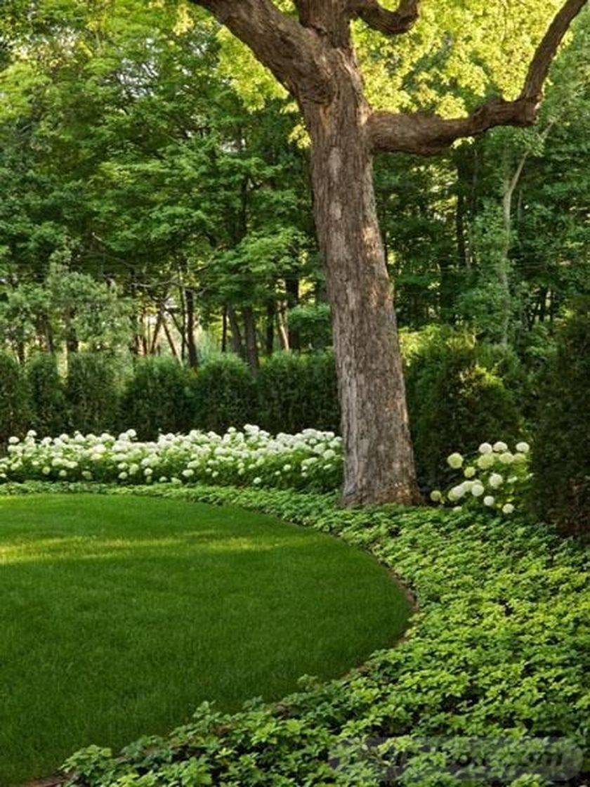 amazing garden ideas-646759196468489687