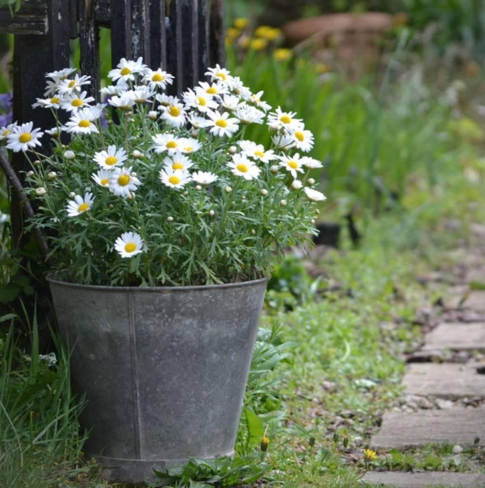 amazing garden ideas-835628905836595491