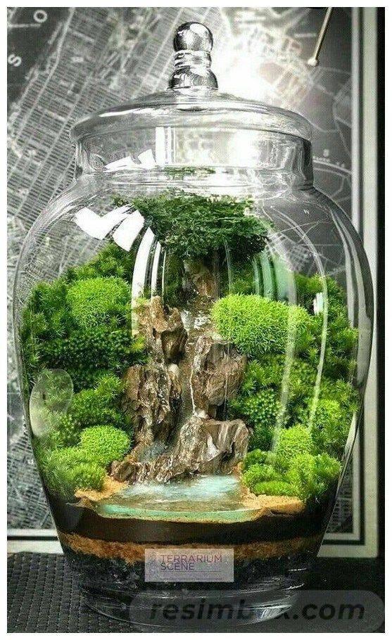 amazing garden ideas-632826185120622926