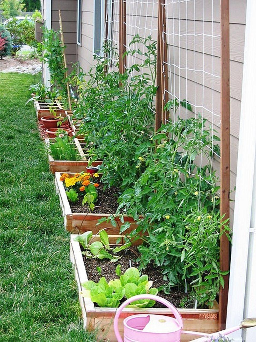 amazing garden ideas-79024168447842523