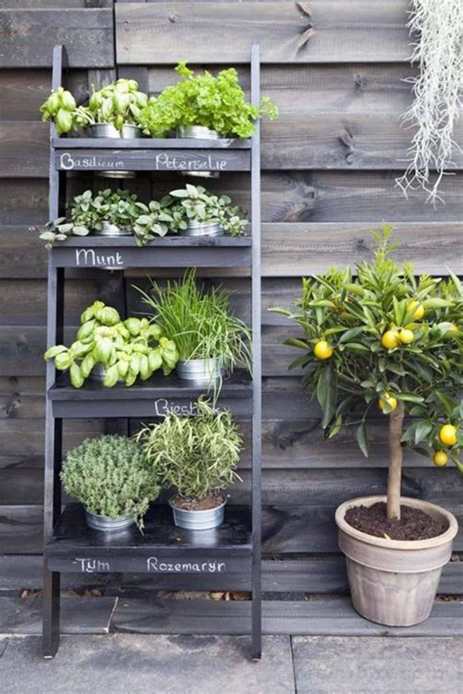 amazing garden ideas-686869380649499183