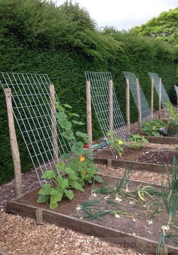 amazing garden ideas-581175526893423738