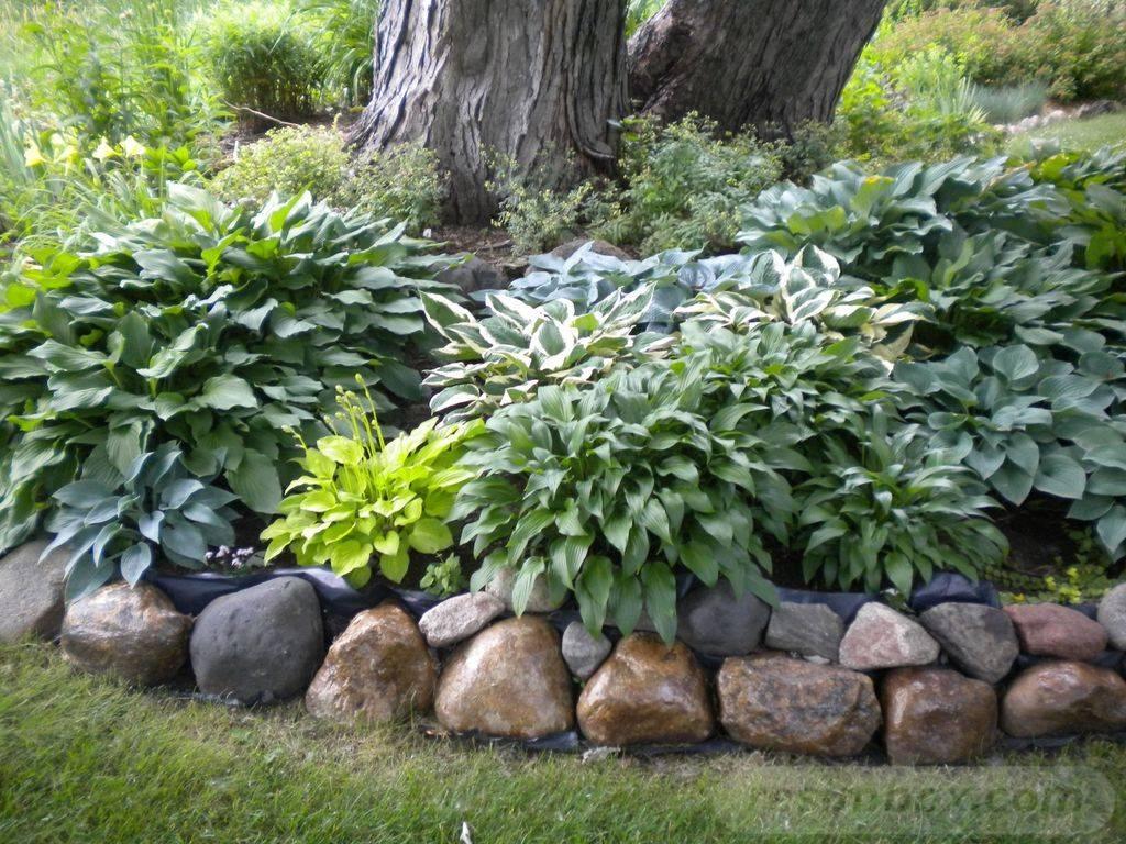 amazing garden ideas-694258098784090469
