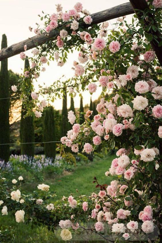 amazing garden ideas-410109109813757651