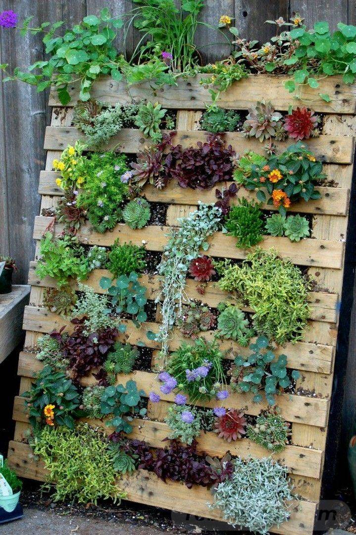 amazing garden ideas-812759063982475005