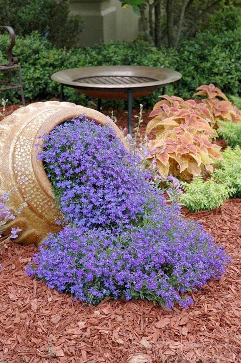 amazing garden ideas-820640363332790207
