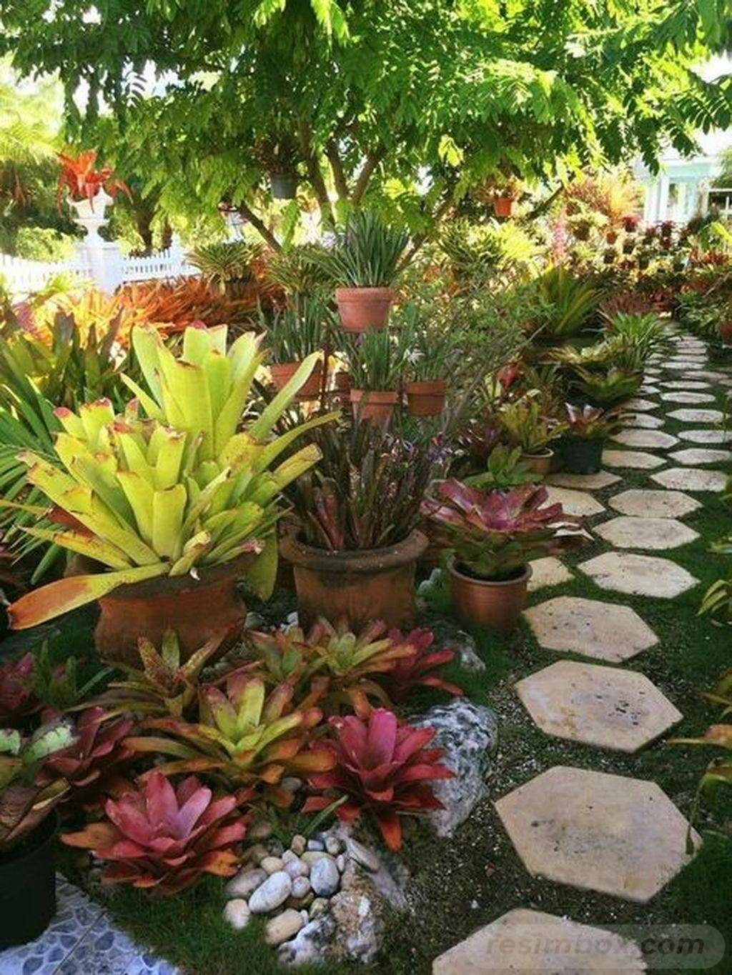 tropical garden ideas-647673990141159537