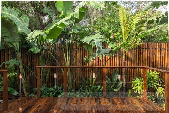tropical garden ideas-427208714650371282