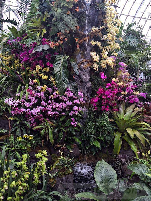 tropical garden ideas-861806078674712829