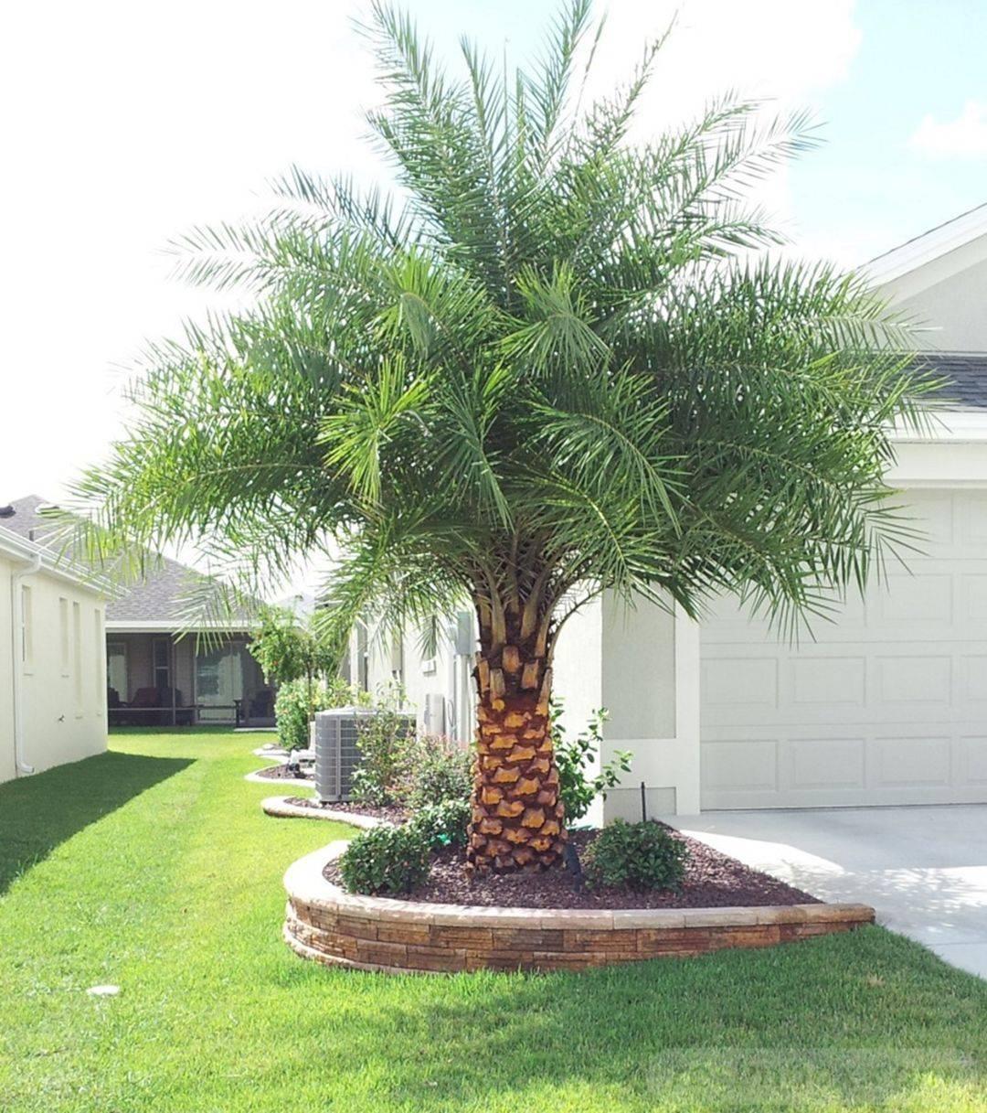 tropical garden ideas-411797959676244619