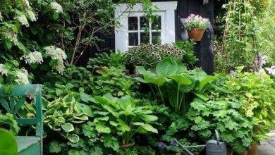 15 Coolest Beautiful Gardens With Tropical Plants