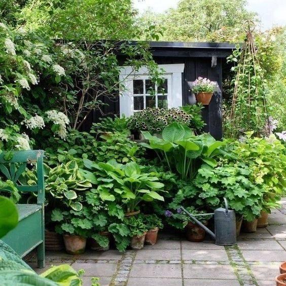 tropical garden ideas-604537949963452378