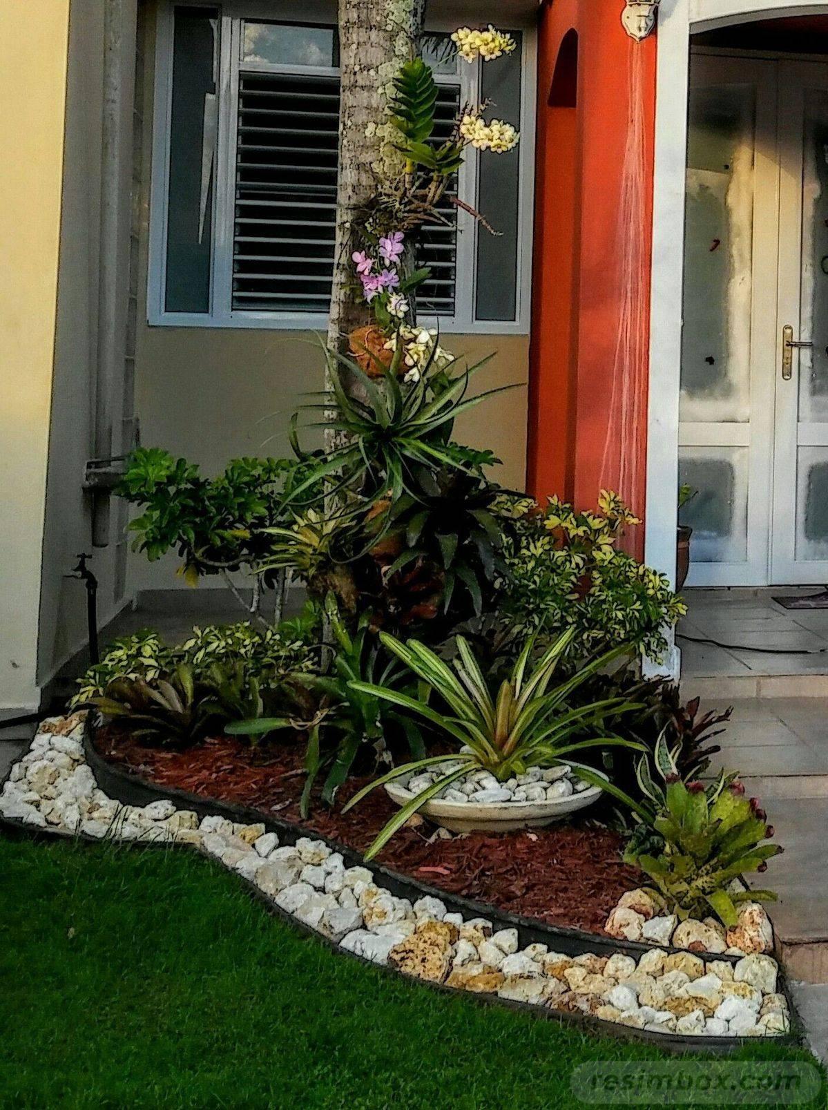 tropical garden ideas-836121487048399860