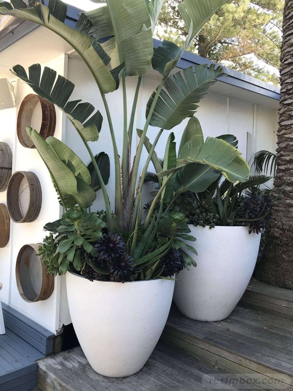 tropical garden ideas-744993963336243156
