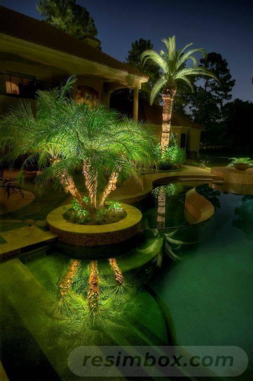 tropical garden ideas-724305552551982119