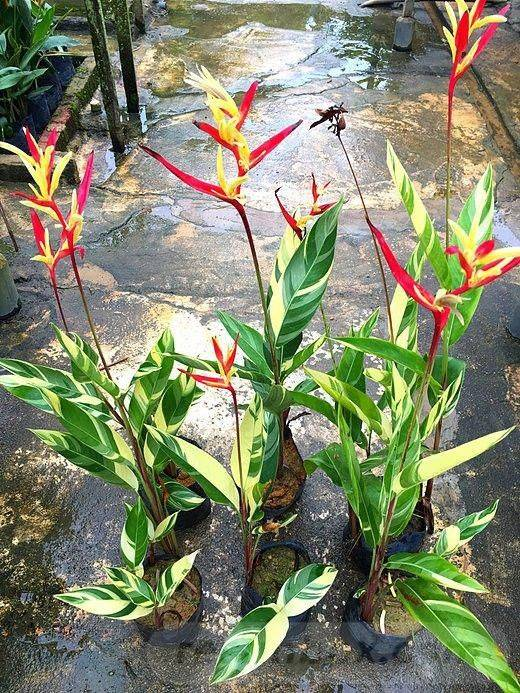 tropical garden ideas-748653138036933842