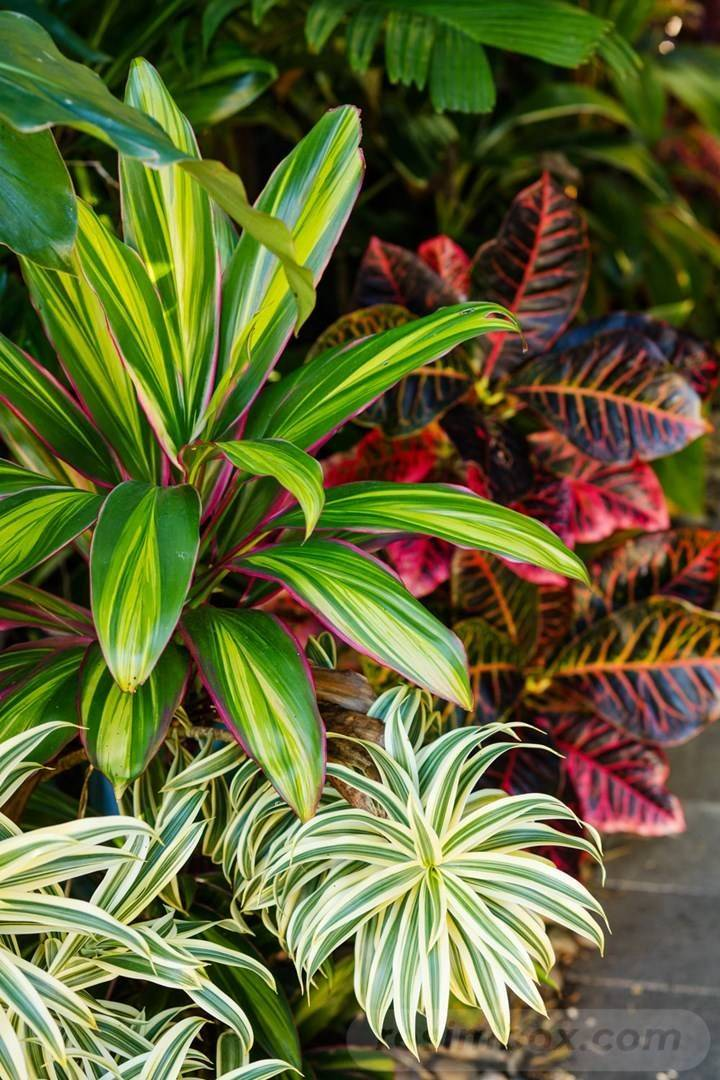 tropical garden ideas-7107311898433557