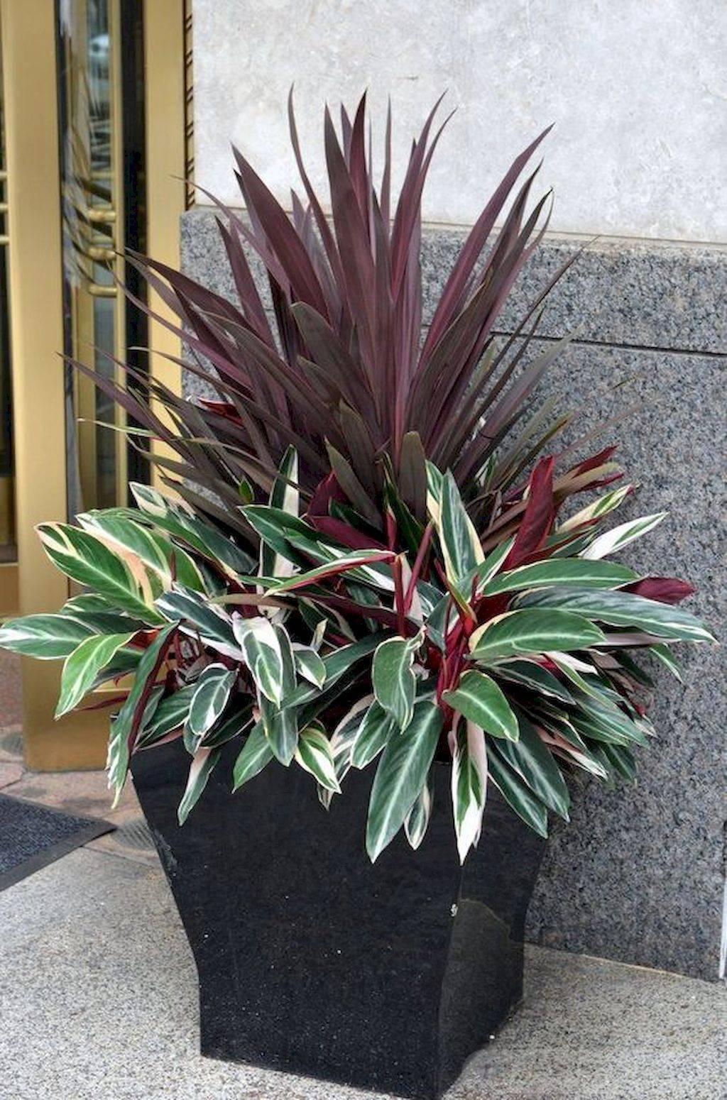 tropical garden ideas-757097387338731053