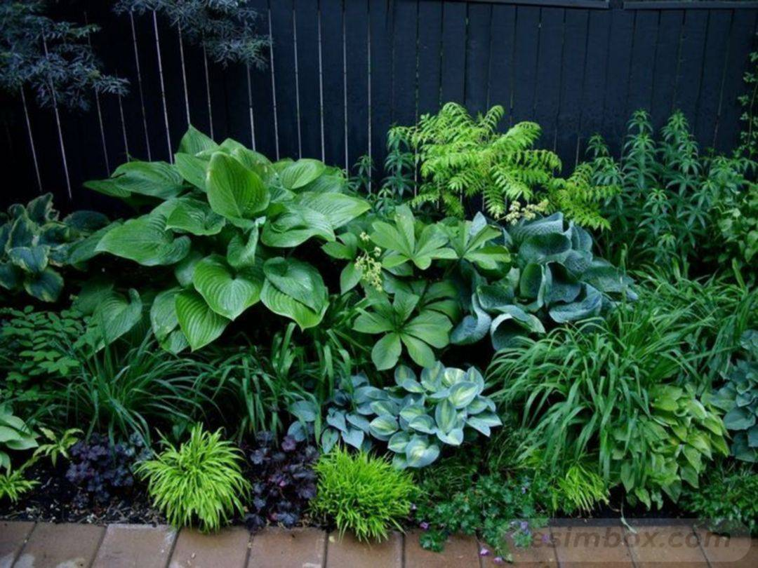 tropical garden ideas-835628905836015726