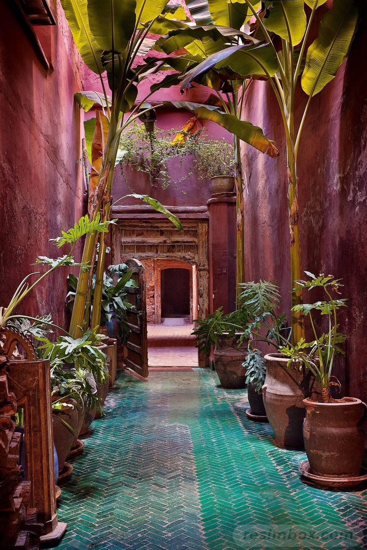 tropical garden ideas-579345939541021486
