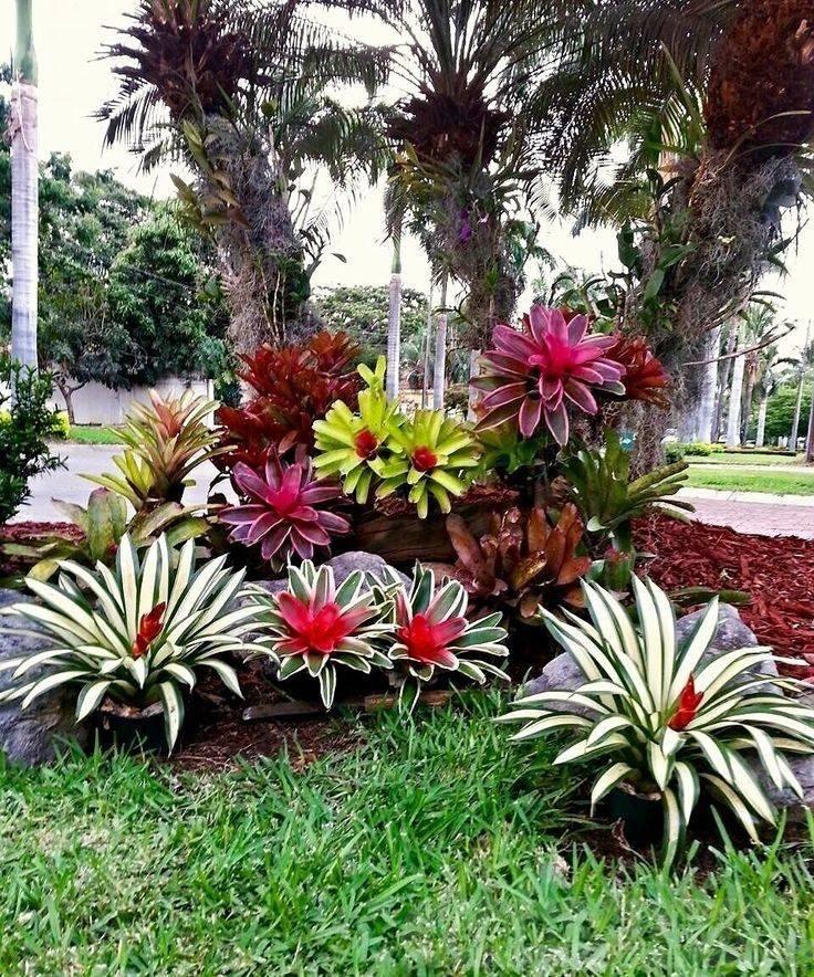 tropical garden ideas-763149099338606033