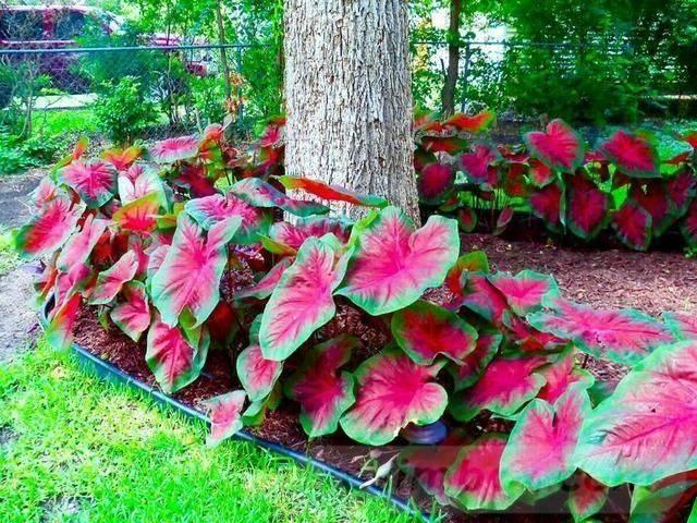 tropical garden ideas-807411039424260790