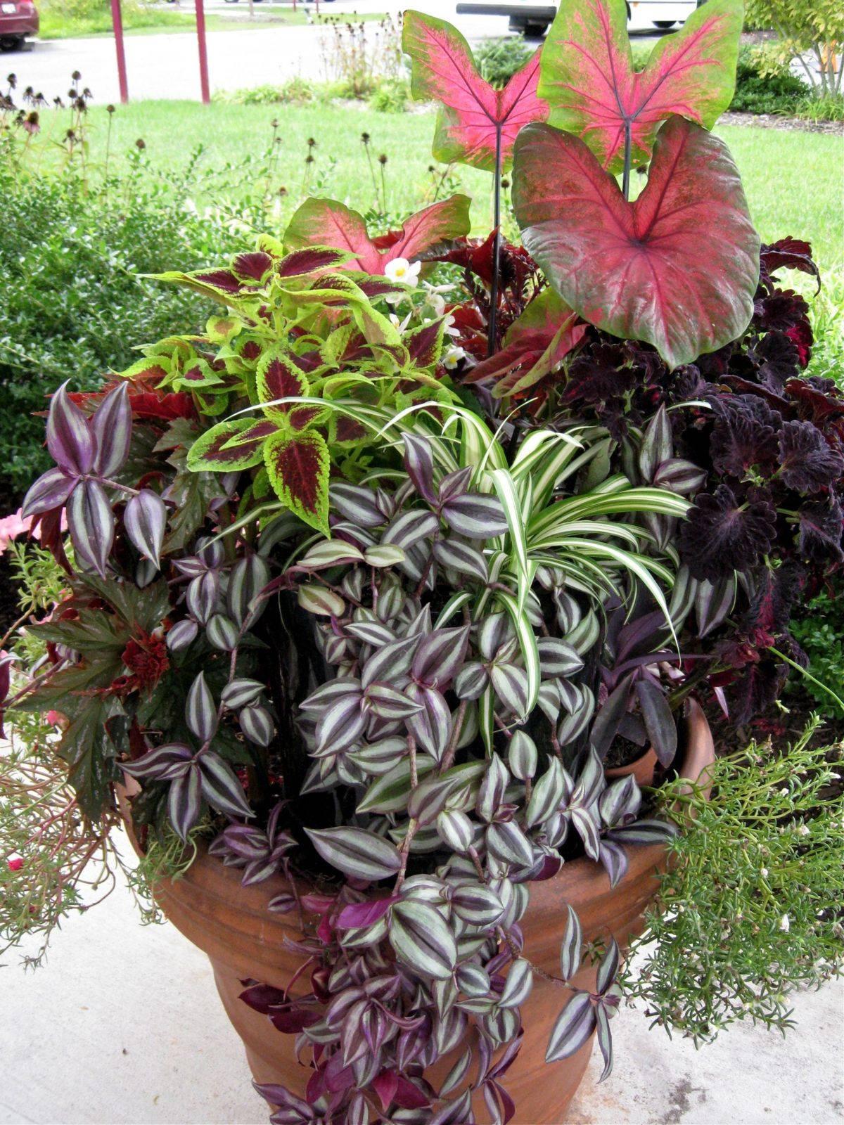 tropical garden ideas-411797959675360386