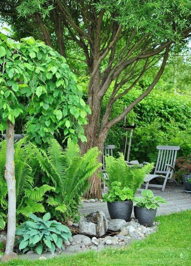 tropical garden ideas-663295851349580973
