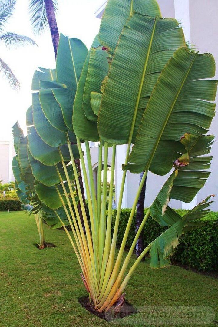tropical garden ideas-812759063980453888