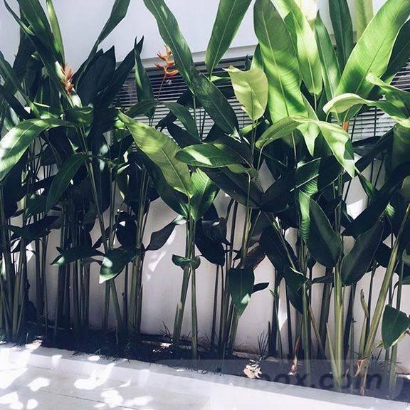 tropical garden ideas-32651166035054439