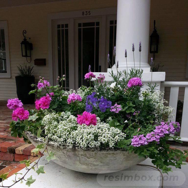 tropical garden ideas-629941066609229118
