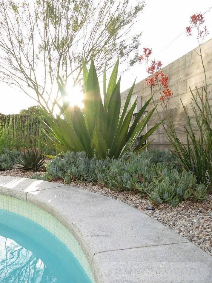tropical garden ideas-626352260652155119