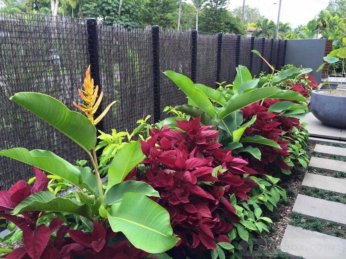 tropical garden ideas-812759063980442742