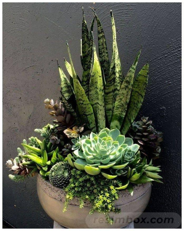 creative garden ideas-746119863246939197