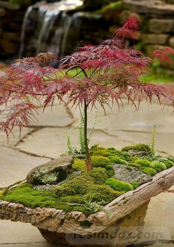 creative garden ideas-649925789957494639
