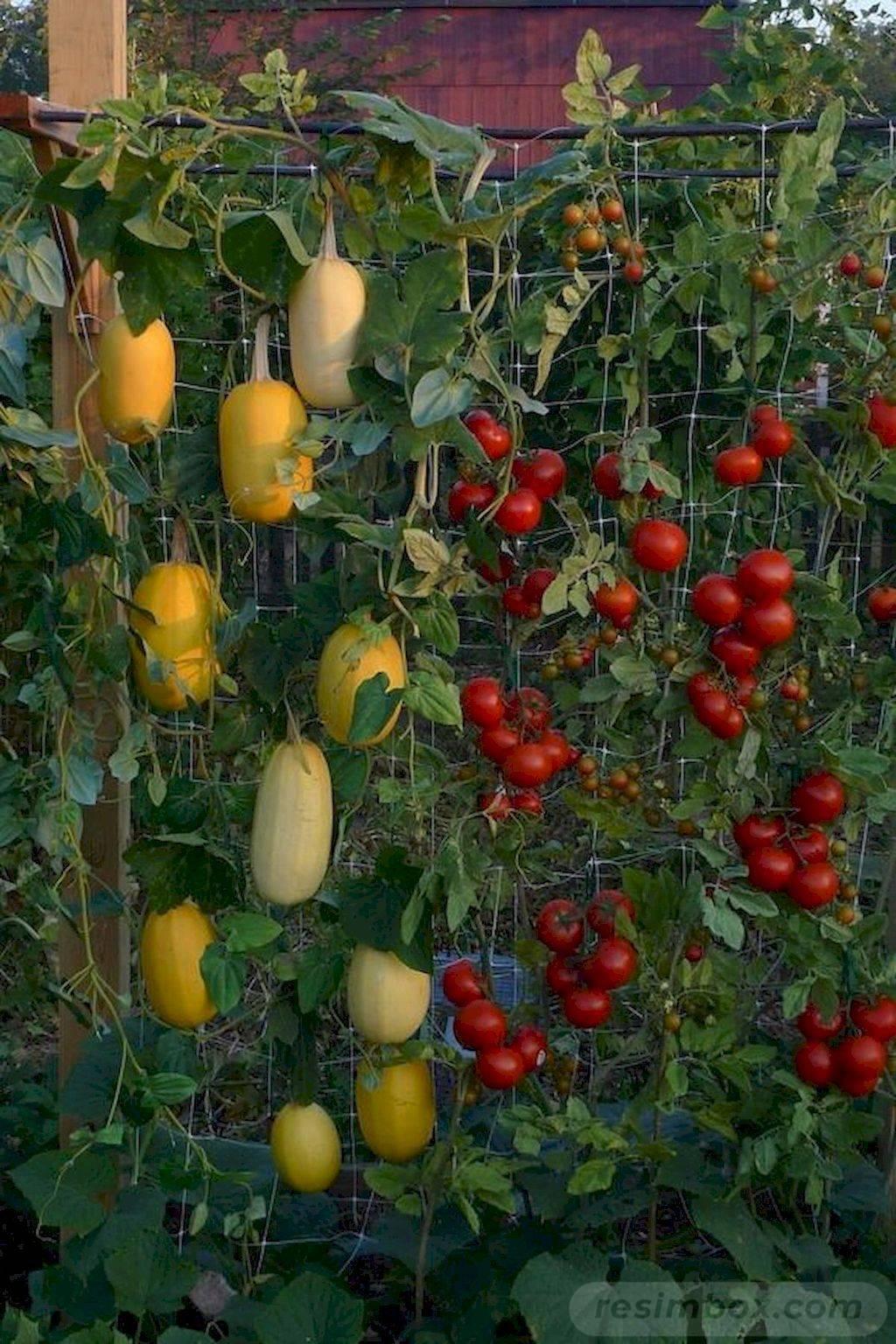 creative garden ideas-26951297757347486