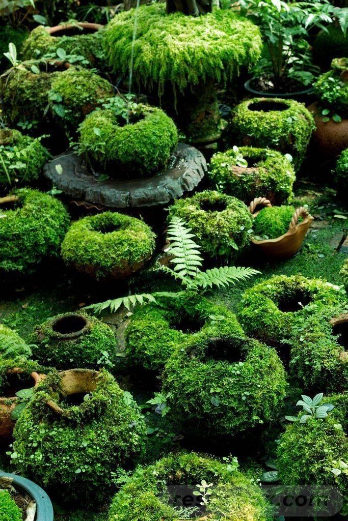 diy garden easy-663084745116974013