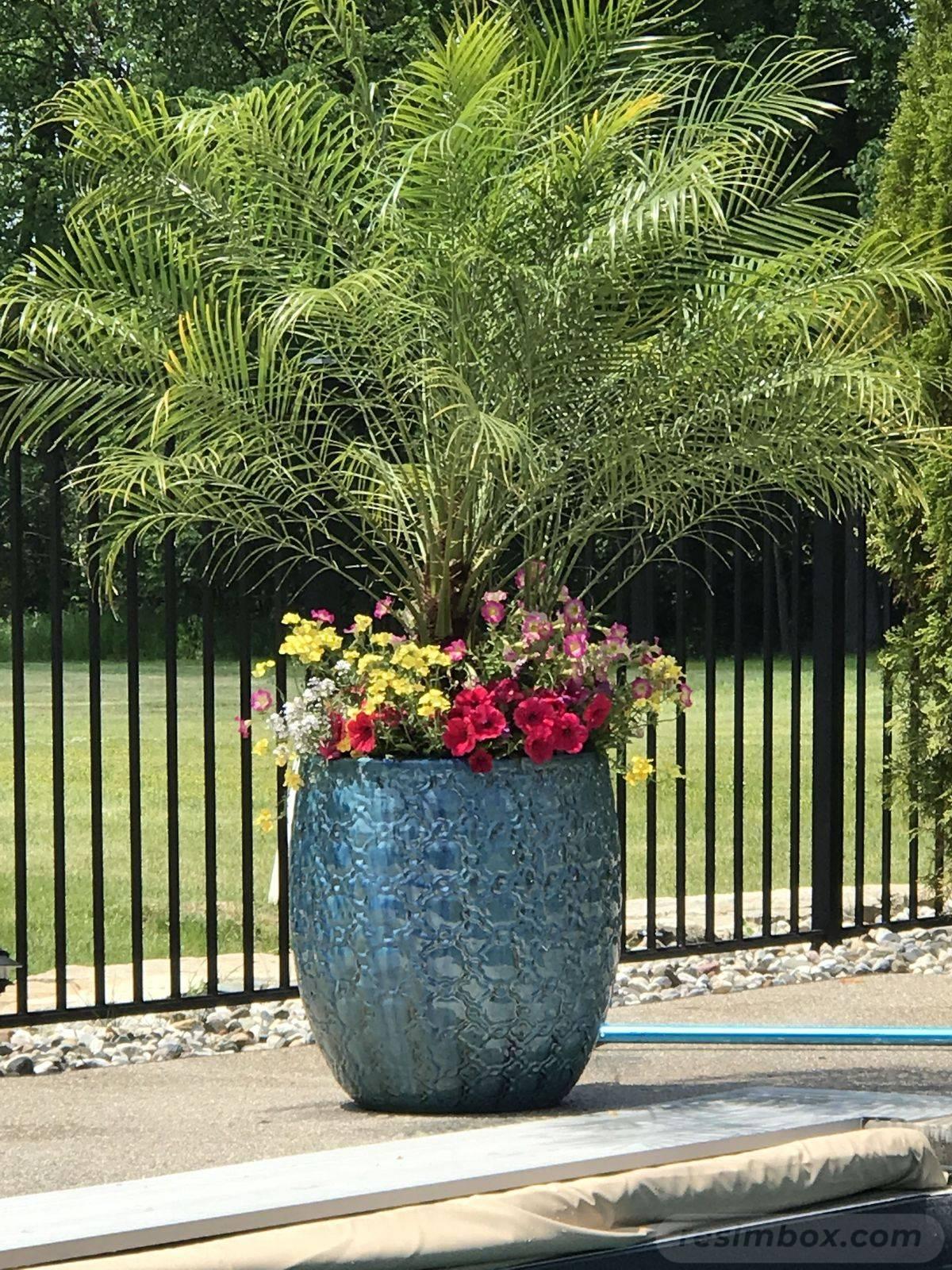 tropical garden ideas-473159504601080077