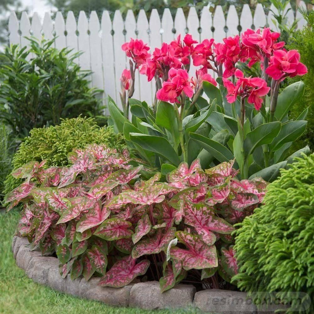 tropical garden ideas-634796509958903862