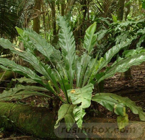 tropical garden ideas-84935142959390106