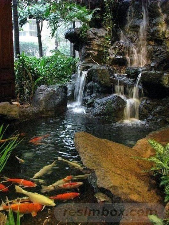 tropical garden ideas-673358581765866175