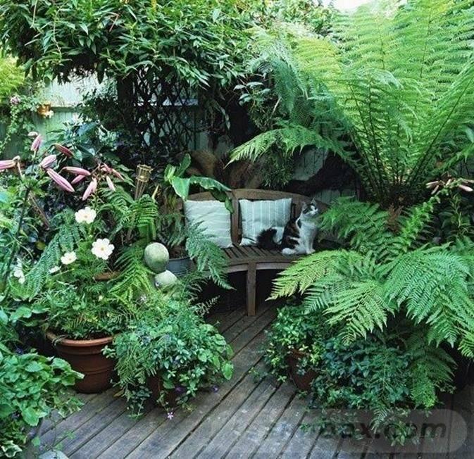tropical garden ideas-834784480910902505