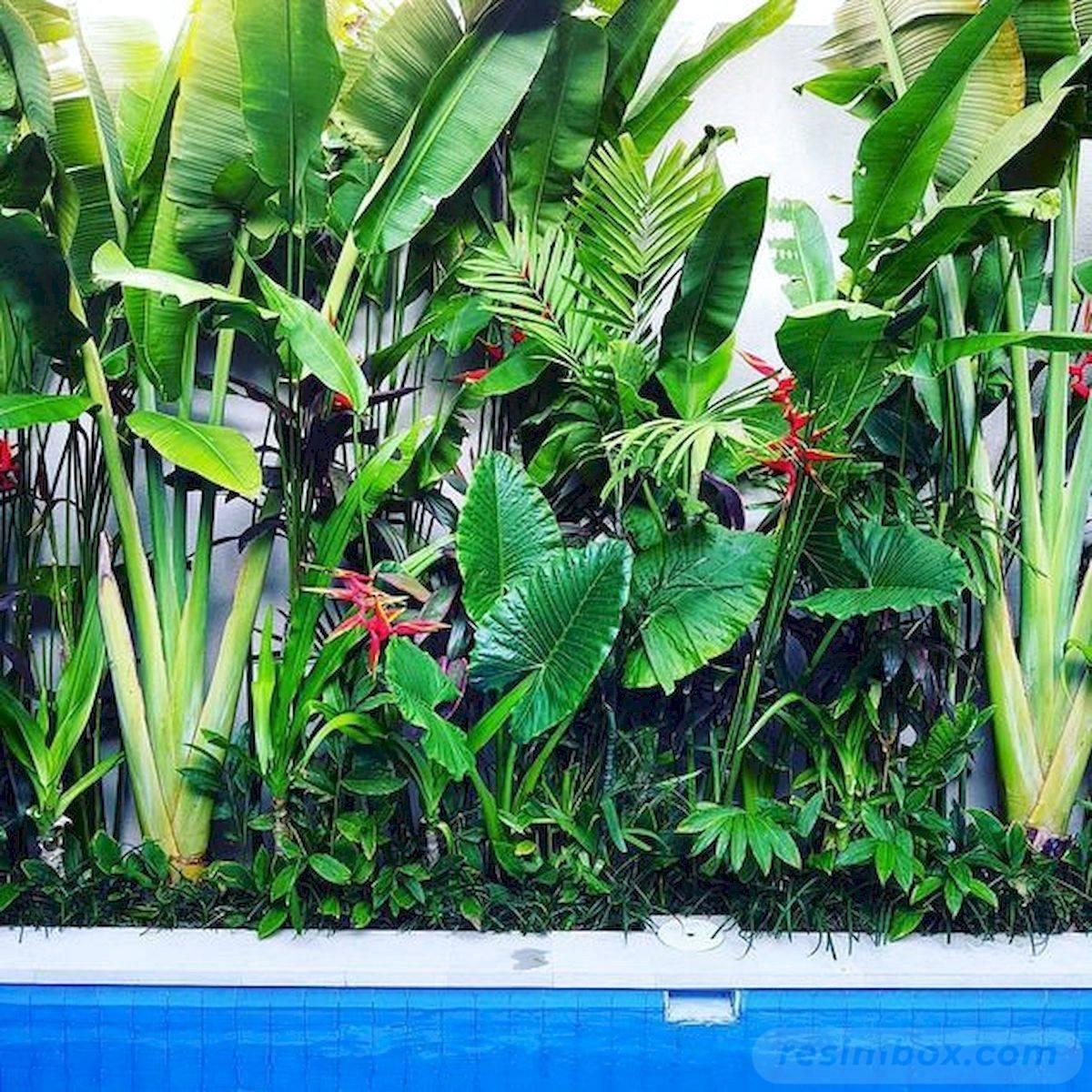 tropical garden ideas-588423507545035260