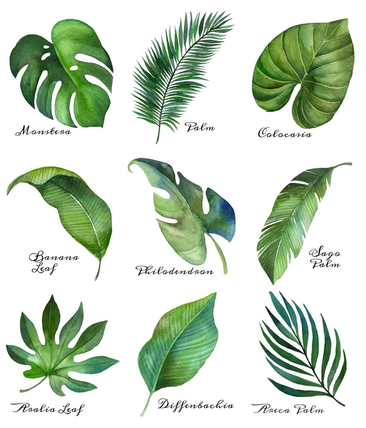 tropical garden ideas-198580664806197308