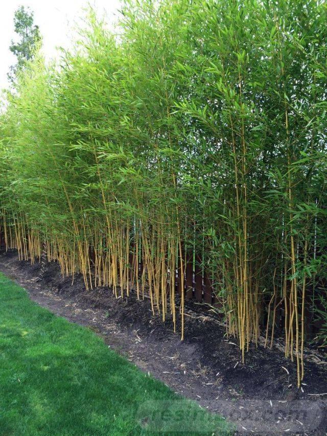 tropical garden ideas-688980442974411890