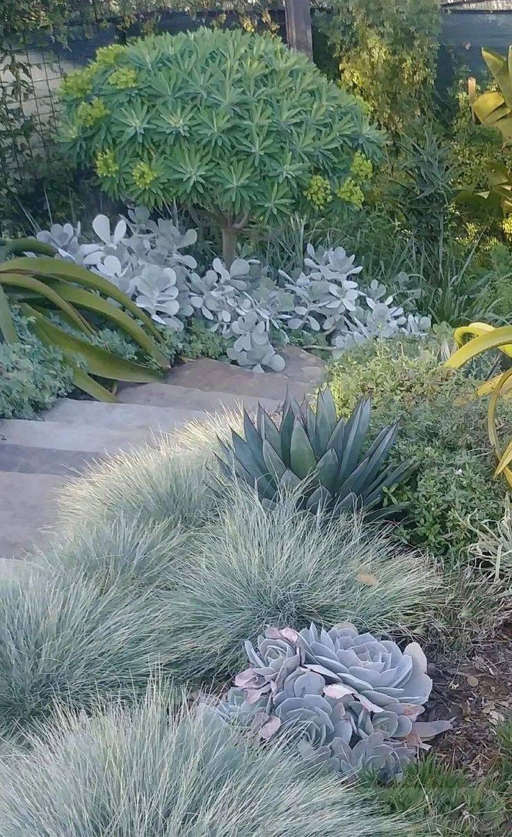 tropical garden ideas-663295851349517402